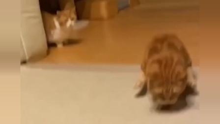 橘猫走路是这个样子的吗?底盘这么低