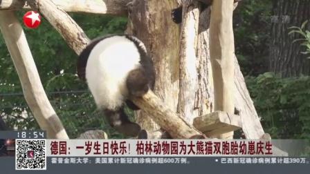视频|德国: 一岁生日快乐! 柏林动物园为大熊猫双胞胎幼崽庆生