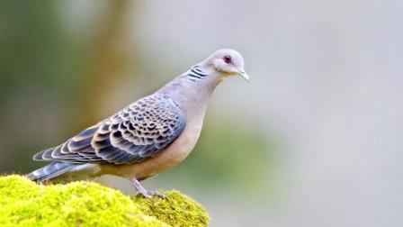 十二星座变身成小鸟,你最想把谁养起来?
