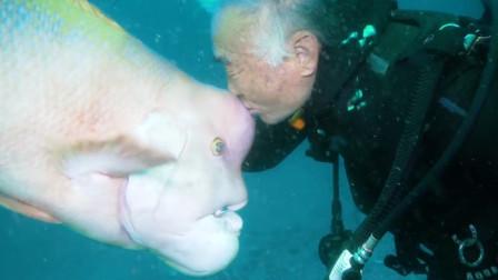 """""""老人与海"""",日本一位80岁老人,居然和一条鱼拜把子成了兄弟!"""