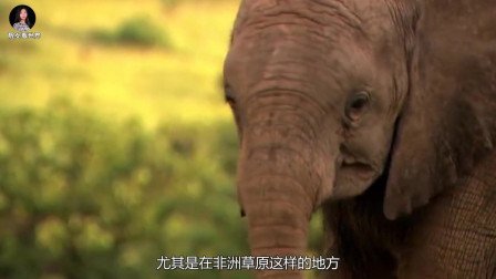 10万只麻雀围攻几头大象,想要霸占水资源,镜头记录全过程!