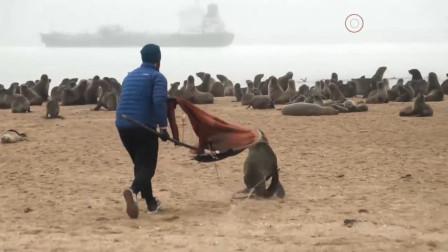 男子拿着一把剪刀冲向海豹群,海豹被吓得疯狂逃窜!这是干嘛?