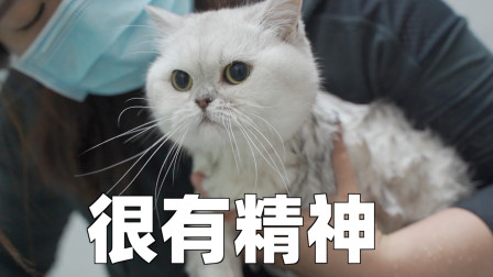 把洗猫拍成今日说法,下辈子再也不想养猫了!