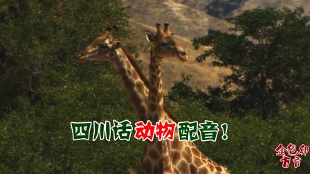 四川话搞笑配音:长颈鹿摆造型上电视,后悔没整个好发型