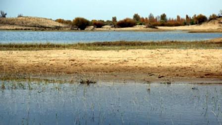 大蟒蛇:蟒蛇饥饿把鳄鱼当食物,趁鳄鱼上岸去捕杀
