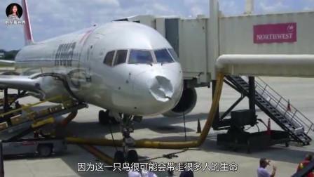 飞机在飞行中,万一和鸟相撞后果有多严重?看完才知道危险性!
