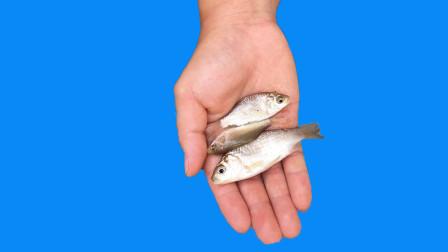魔术教程:空手变鱼,鱼藏哪里?方法比你想得还简单