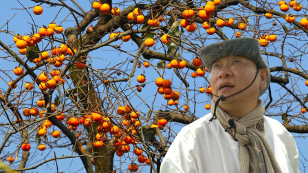 水果免费吃?村庄,果树没人要,大叔摘了一大袋,开心坏了!