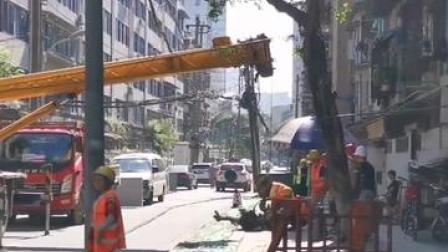 成都桂花巷几十年桂花树被砍。周围居民郁闷至极:太可惜了!
