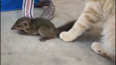 不管是黑猫白猫,能抓老鼠就是好猫,我是给看笑了!