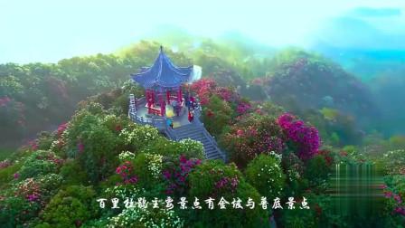 这就是贵州百里杜鹃天然大花海,清晨薄雾笼罩似仙境