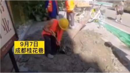 官方回应#成都300年桂花巷内桂花树全被砍 已
