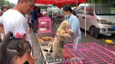 农村狗市:养了10多年的比熊,听到要被卖掉,一直抱着大姐,瞬间流出了眼泪