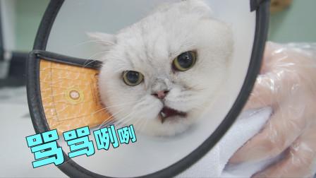 小病猫去医院秒变母老虎,直接对医生破口大骂:真当我不发威?