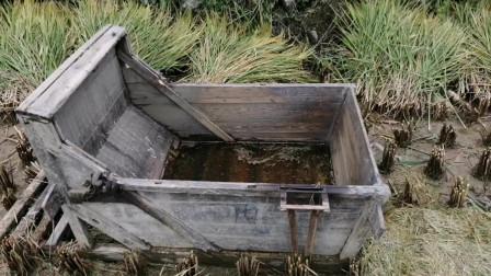 湖南新化农村收稻谷了,30多年的老古董,70 80后的记忆