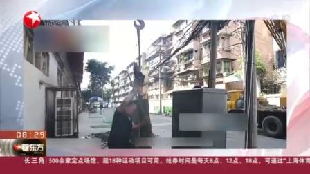 视频|四川成都: 桂花巷桂花树被砍 系施工方擅自砍伐已被