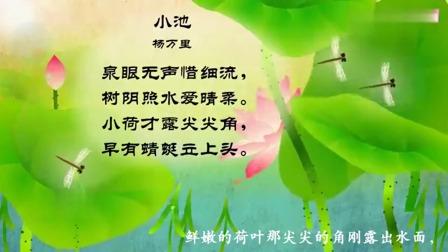 嘟拉古诗:杨万里这首小池,写出荷花的美景,让人仿佛置身之中