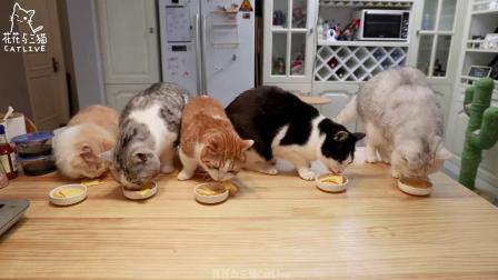 1人2猫集体过生猫咪吃生日蛋糕,主人简单吃个帝王蟹火锅