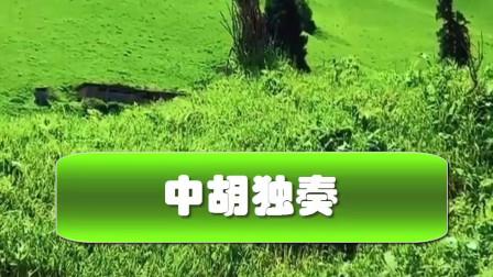 草原多么美  中胡独奏