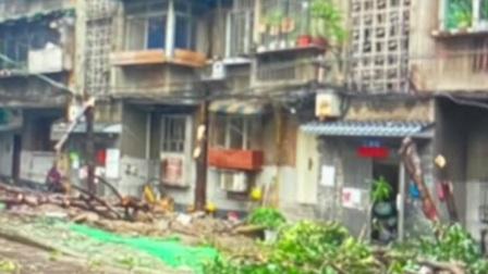 共度晨光 2020 四川:施工单位擅自砍伐 桂花巷里20棵桂花树被砍