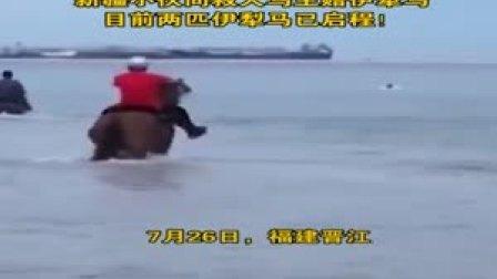 福建3人骑马下海勇救12岁男孩, 两匹马高烧去世, 小伙向救人马主赠伊犁马