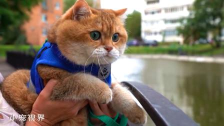 发现鸭子的大脸猫,一脸呆萌:我想加餐