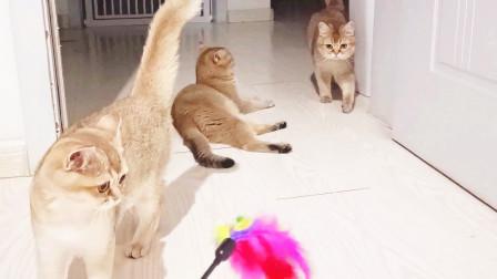 猫妈和两胎的大小女儿嗨玩逗猫棒,这画面就像女人花摇曳在红尘中