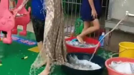 每次幼儿园洗被子的日子,我都是超级认真的!