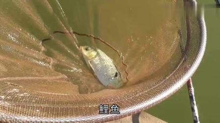 农村水库的鱼情都饿疯了吗?农村小伙下杆就黑漂,手都拉酸了
