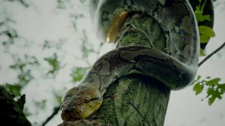 丛林少女之荒野逃生,看的我惊心动魄