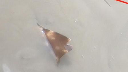 赶海闯进几米深沟,浑水中一条鲨鱼翅浮在水面,小妹吓的不敢动弹