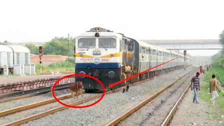 """火车呼啸而来,黄牛却还在慢慢悠悠行走,一瞬间""""牛粪""""满天飞!"""