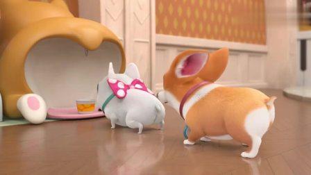 宠物店的小秘密:让MOCO吃不饱,睡不好的原因找出来了!