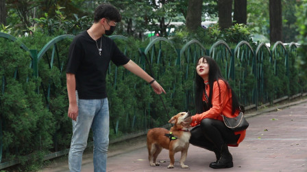当宠物狗被主人当街遗弃,路人:跟我走吧,这狗不能没人管!