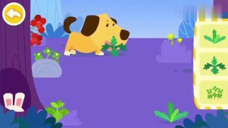 少儿宝宝巴士:狗狗的鼻子好厉害,找东西都是靠闻的