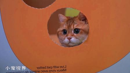 呆萌的大脸猫:一个破洞纸箱加耳机线,我能玩一整天