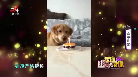 家庭幽默录像:主人买的生日蛋糕太小,狗狗气得用尾巴扇蜡烛:我不管,重新买!