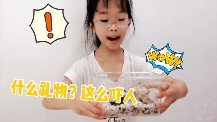 鱼妈给女儿买了礼物,鱼宝打开吓了一跳,连摸都不敢摸一下