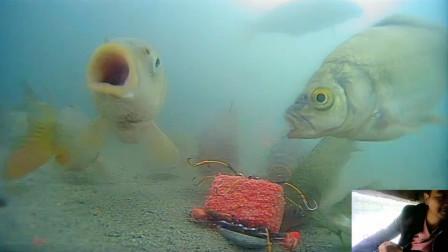 为什么海竿老响不中鱼,水下实拍高清解密,原来是这样啊