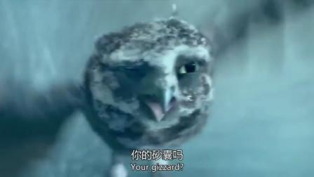 猫头鹰王国:猫头鹰半路遇到大风,这段看了真是揪心!