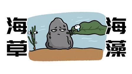 海草和海藻到底有什么区别?