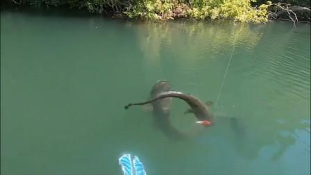 钓一送一,男子成功钓上一条鲶鱼,正开心时发现惊喜还在后面!
