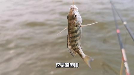 这个钓点,既有海鱼又有河鱼,鱼种丰富还免费,这样钓也不错
