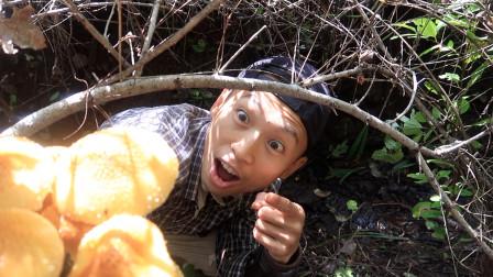 秋季户外:上山采蘑菇,采集天然山水!(2)