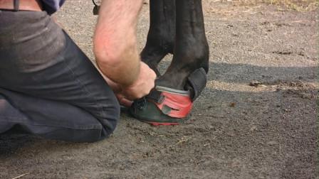 专为马设计的跑鞋,颠覆2千年传统设计,马儿跑一辈子都不累