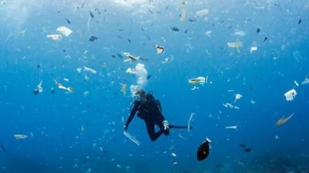 海洋污染远超预期!科学家:每吃一份生蚝会摄入0.7毫克塑料