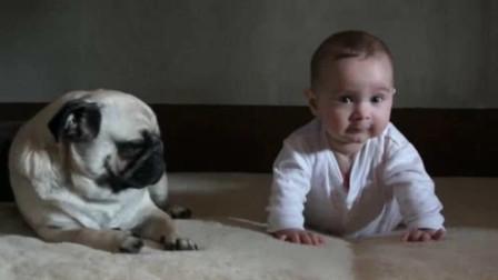 宝宝没坐稳一下趴倒,旁边的狗狗立马神模仿,被狗狗动作给逗笑了