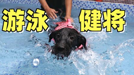 第一次带狗狗去游泳,下水的那一刻狗刨技能直接点满!