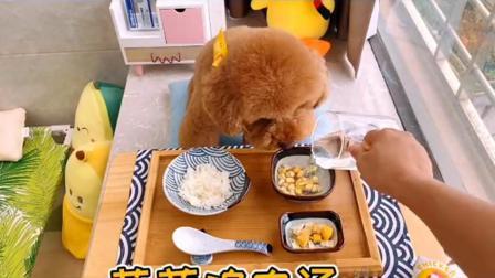 布丁:真想天天吃剩饭!#vlog日常#狗狗吃播