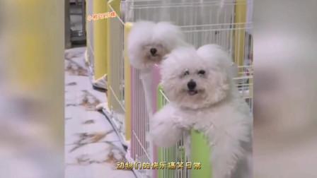 吊萌可爱的小动物们的搞笑短片小视频--谁家还没个萌萌哒小可爱啊?